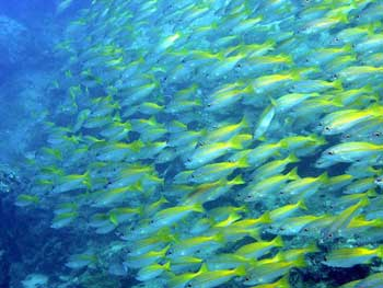 Koh Kon Scuba Diving