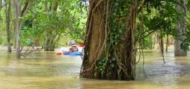 Mekong Flooded Forests Kayaking